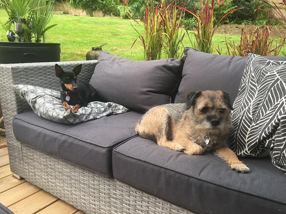 Home Dog Boarding Wadhurst