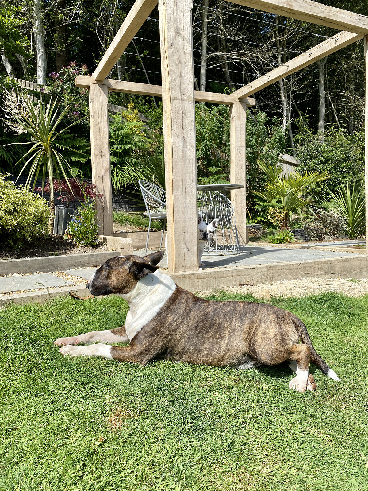 dog boarding kent Tenterden Goudhurst Cranbrook Biddenden Hawkhurst 1