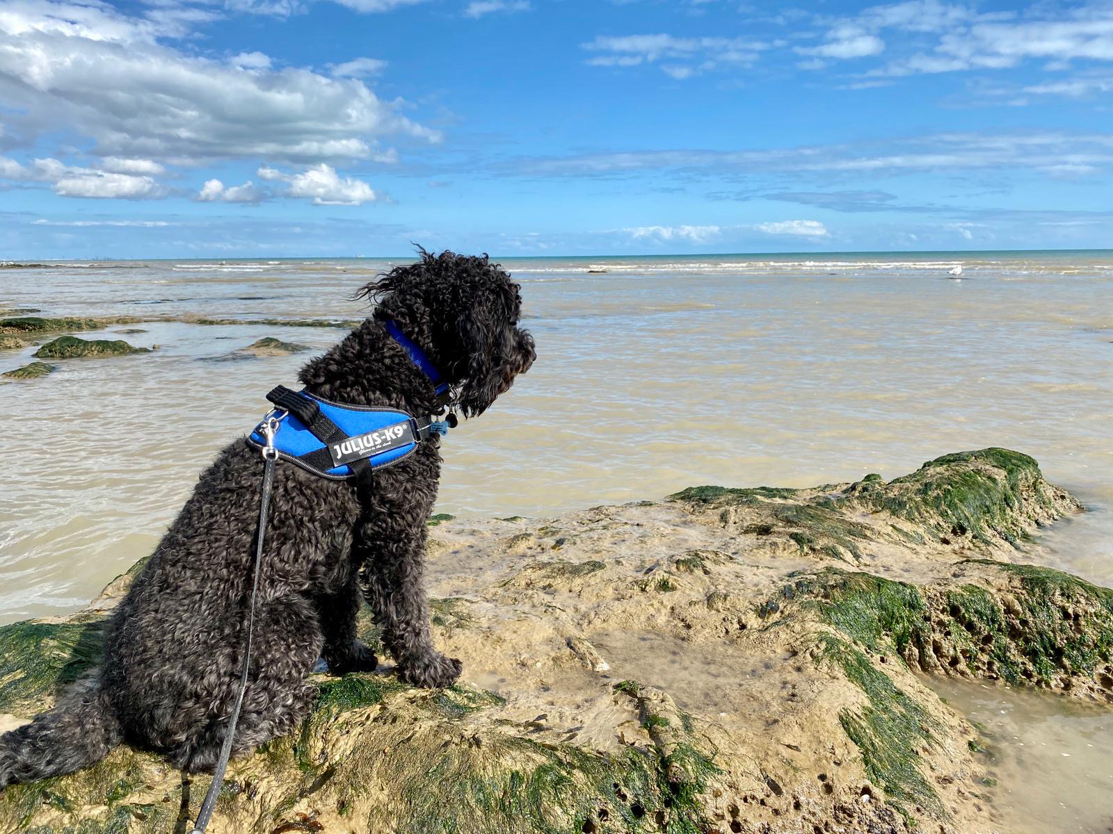 dog boarding tooting balham clapham cockapoo on pett level beach
